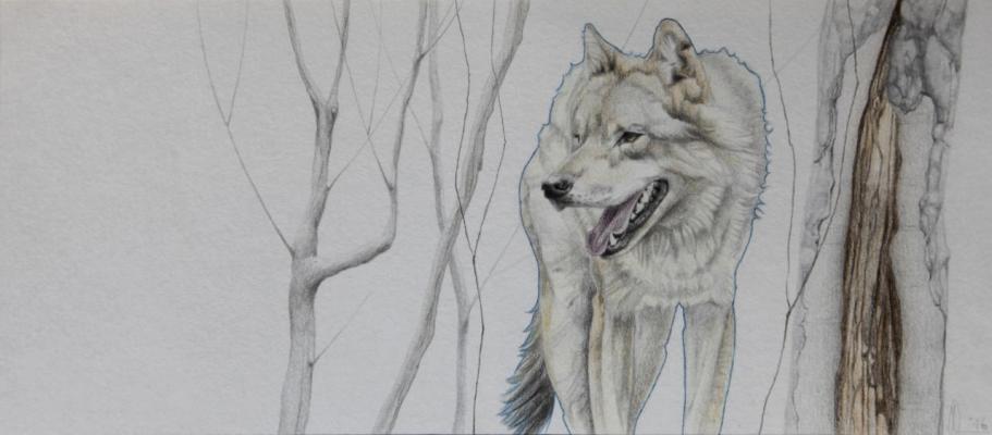 Asjp 10 D.LIN - modèle loup: Domaine des Grottes de Han