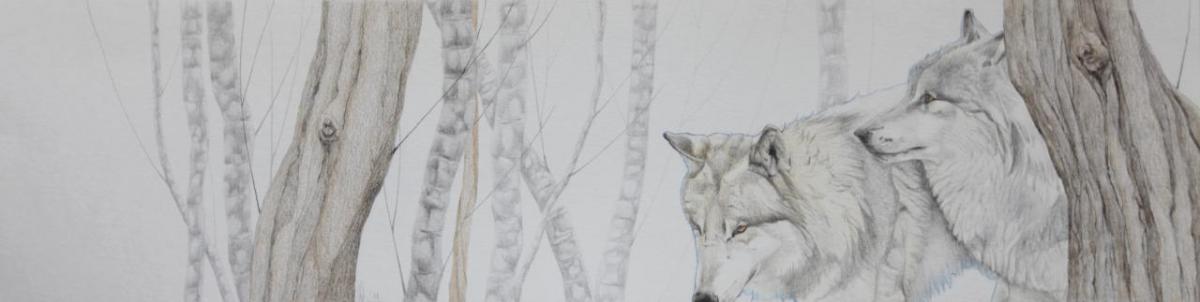 Asjp 14 D.LIN - modèle loup: V. Henoux