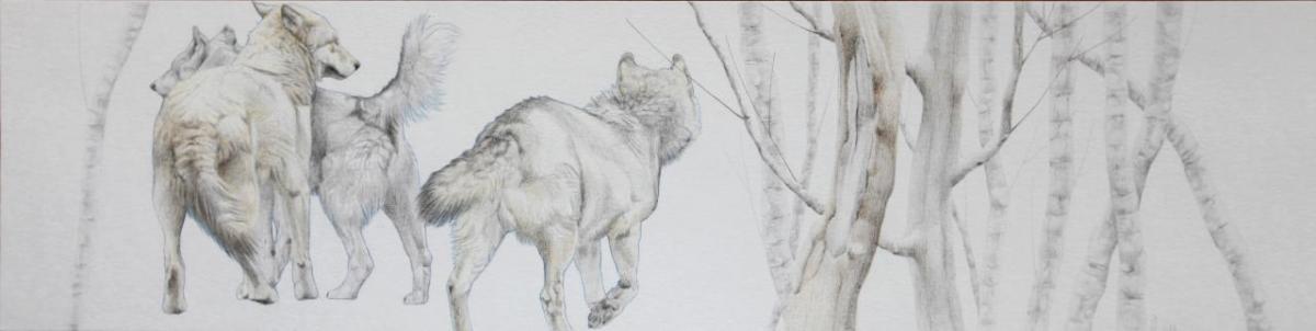 Asjp 18 D.LIN - modèle loup: V. Henoux