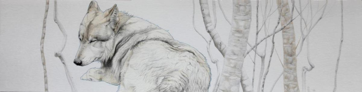 Asjp 19 D.LIN - modèle loup: P. Menetrier-Delalandre