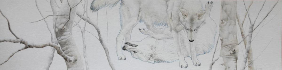 Asjp 20 D.LIN - modèle loup: V. Henoux