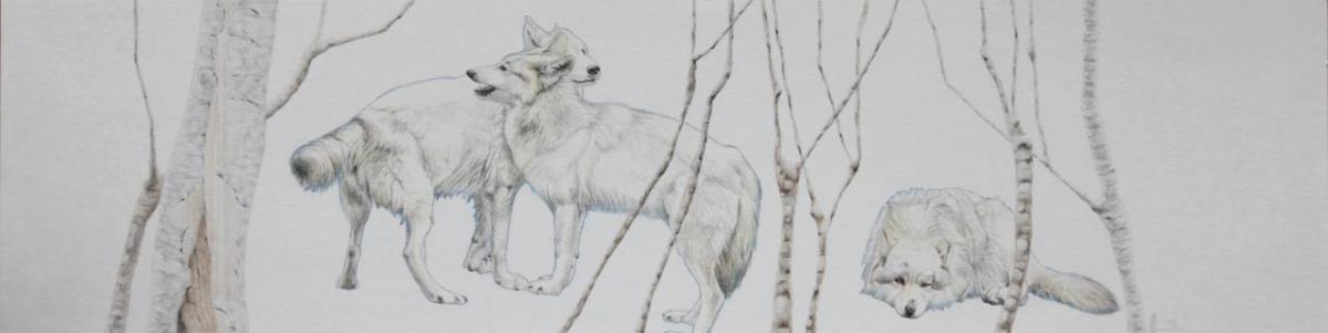 Asjp 21 D.LIN - modèle loup: V. Henoux