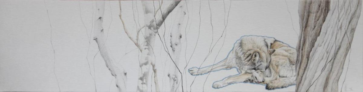 Asjp 24 D.LIN - modèle loup: V. Henoux