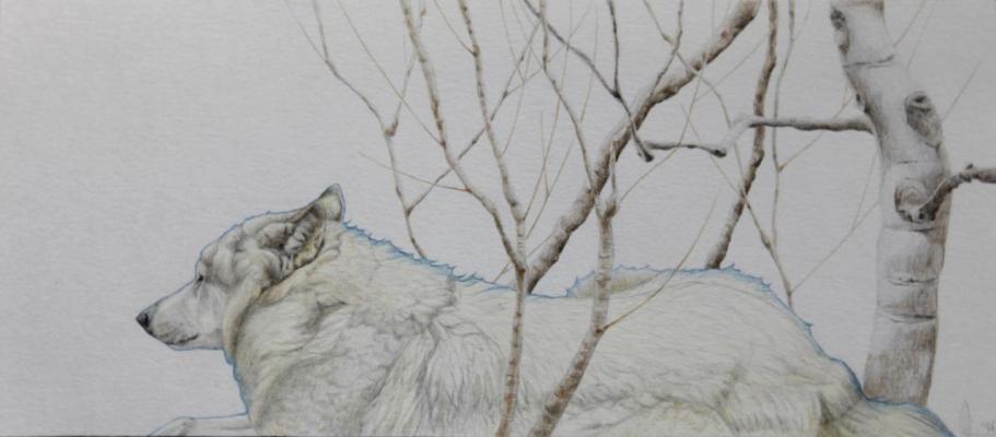 Asjp 3 D.LIN  - modèle loup: V. Henoux